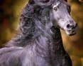 Top-Pferdefotografin Christiane Slawik wieder in Luhmühlen